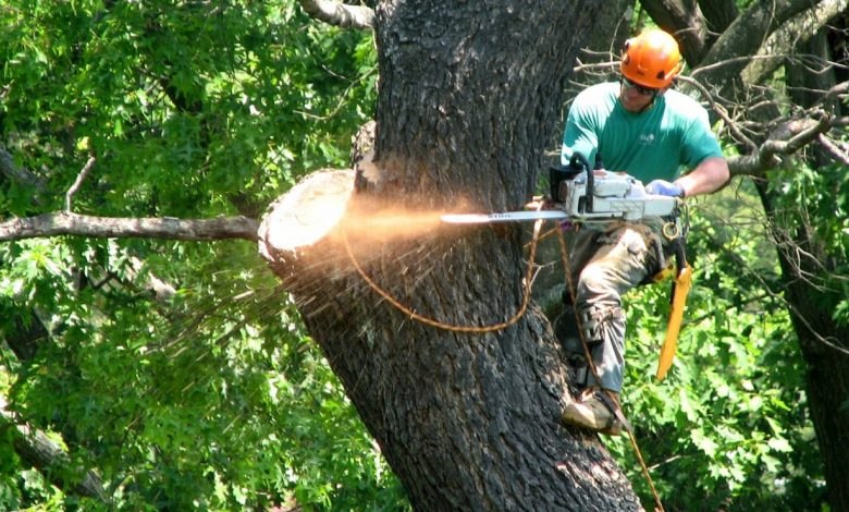 Photo of Looking For Tree Services In Nassau County? Don't Miss These Pointers!